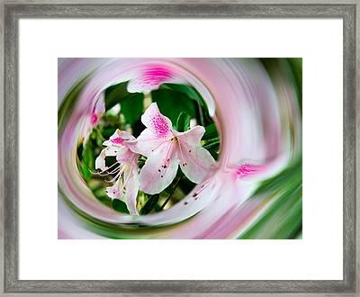 Azalea Swirl Framed Print by Penny Lisowski