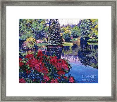 Azaleas In Spring Framed Print by David Lloyd Glover