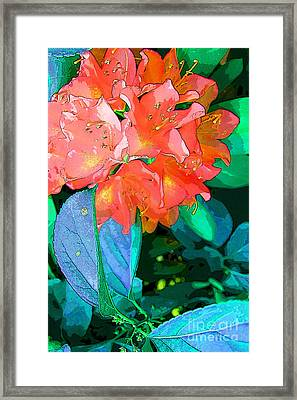 Azealia Framed Print by Laura Sapko
