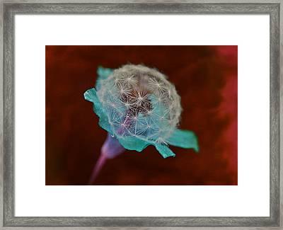 Azelda Framed Print by Marianna Mills