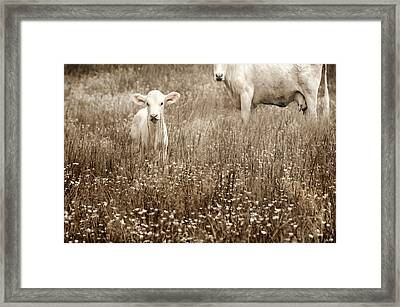 Babe Of Mine Framed Print by Steven  Michael