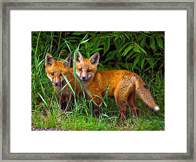 Babes In The Woods Framed Print by Steve Harrington