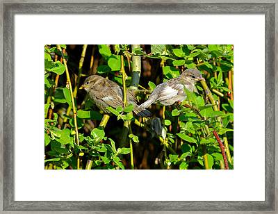 Babies Afraid To Fly Framed Print by Frozen in Time Fine Art Photography