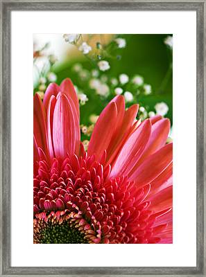 Babies Breath And Gerber Daisy Framed Print by Marilyn Hunt
