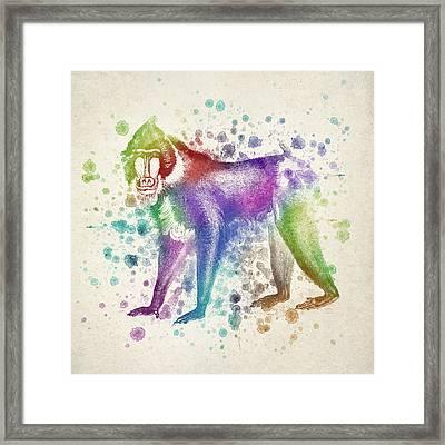 Baboon Splash Framed Print by Aged Pixel