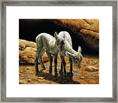 Baby Bighorns Framed Print by Crista Forest