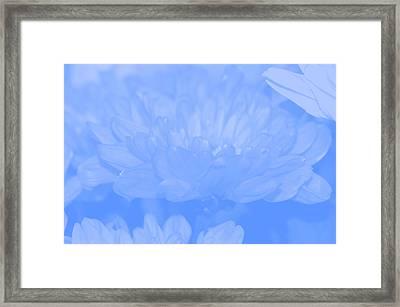 Baby Blue 1 Framed Print by Carol Lynch