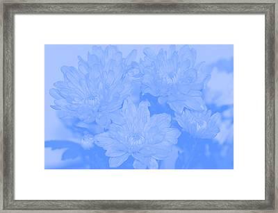 Baby Blue 2 Framed Print by Carol Lynch