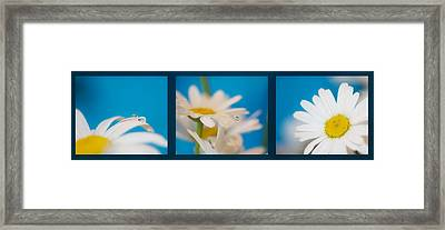 Baby Blue Triptych Framed Print by Lisa Knechtel