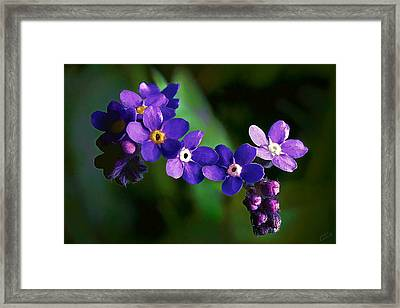 Baby Blues Framed Print by Bill Caldwell -        ABeautifulSky Photography