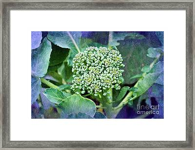 Baby Broccoli - Vegetable - Garden 4 Framed Print by Andee Design