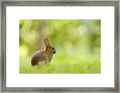 Baby Bunny In The Forest Framed Print by Roeselien Raimond
