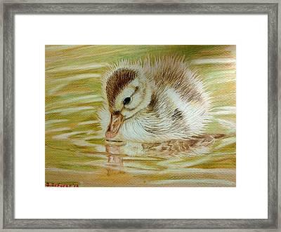 Baby Duck On Pond Framed Print by Sara DeForge