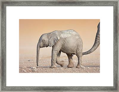 Baby Elephant  Framed Print by Johan Swanepoel