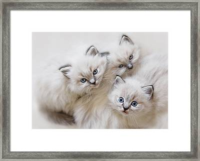 Baby Faces Framed Print by Lori Deiter