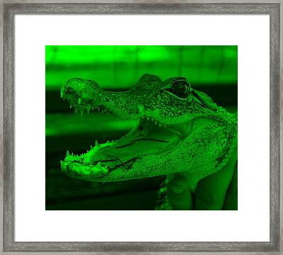 Baby Gator Green Framed Print by Rob Hans
