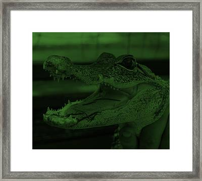 Baby Gator Olive Green Framed Print by Rob Hans