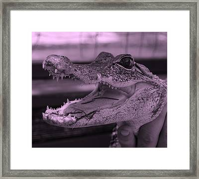 Baby Gator Pink Framed Print by Rob Hans