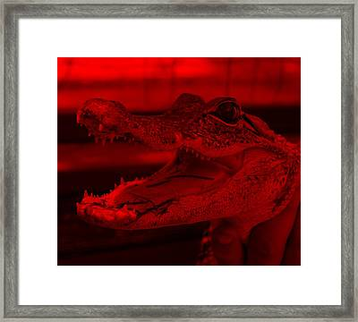 Baby Gator Red Framed Print by Rob Hans