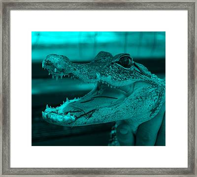Baby Gator Turquoise Framed Print by Rob Hans