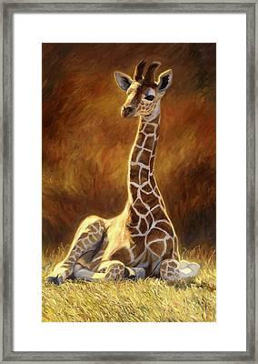 Baby Giraffe Framed Print by Lucie Bilodeau