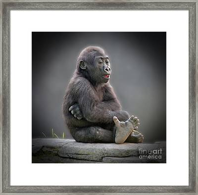 Baby Gorilla Singing To Himself  Framed Print by Jim Fitzpatrick