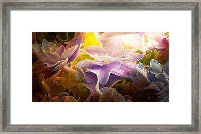 Baby Hydrangeas Framed Print by Bob Orsillo