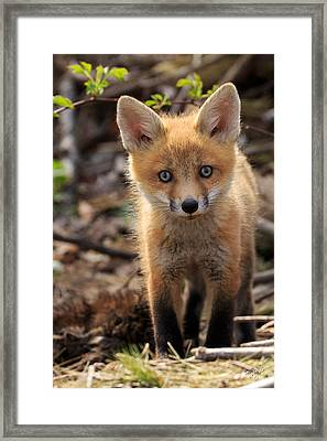 Baby In The Wild Framed Print by Everet Regal