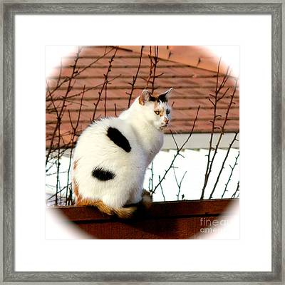 Baby Its Cold Outside Framed Print by Phyllis Kaltenbach