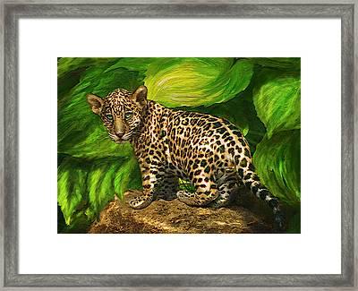 Baby Jaguar Framed Print by Jane Schnetlage