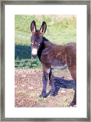 Baby Jenny Framed Print by Jan Amiss Photography