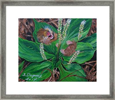 Baby   Molly  Framed Print by Sharon Duguay
