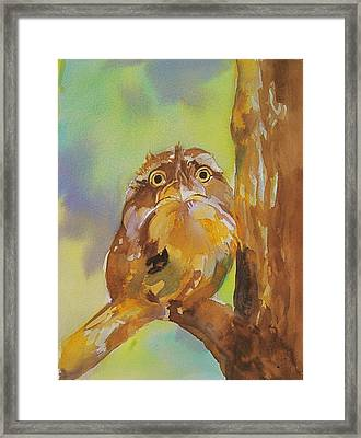 Baby Owl Framed Print by Reveille Kennedy