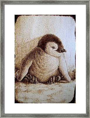 Baby Penguin Framed Print by Cara Jordan