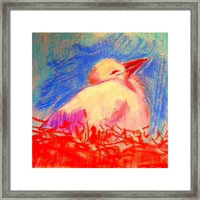 Baby Stork Framed Print by Sue Jacobi