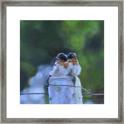 Baby Swallows On Post Framed Print by Donna Tuten