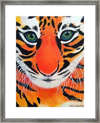 Baby Tiger Framed Print by Lisa Bentley