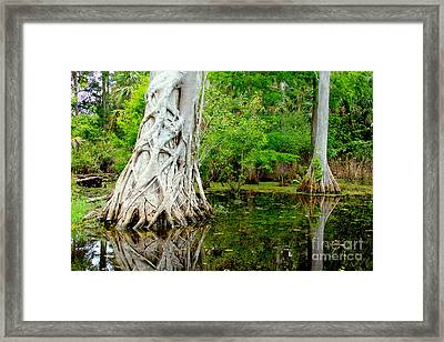 Backcountry Framed Print by Carey Chen
