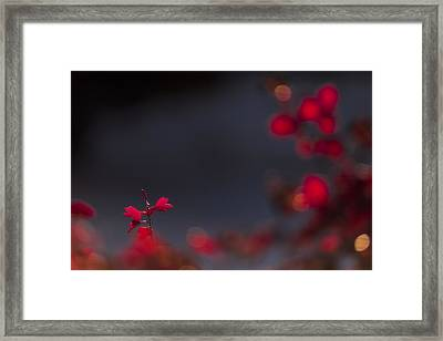 Backlight Framed Print by Chad Dutson