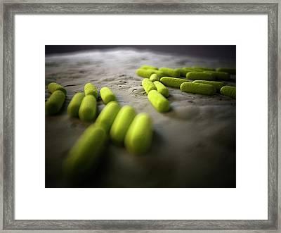 Bacteria Framed Print by Sebastian Kaulitzki