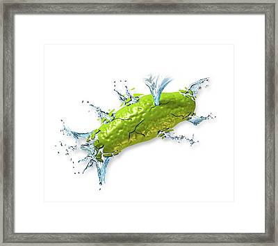 Bacterial Cell Bursting Framed Print by Henning Dalhoff