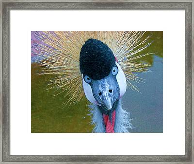 Bad Hair Day Framed Print by Margaret Bobb