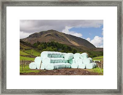 Bags Of Silage On A Farm Framed Print by Ashley Cooper