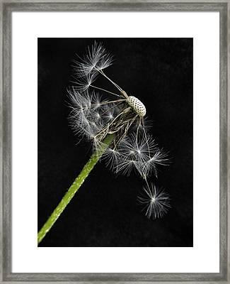 Balanced  Framed Print by Marianna Mills
