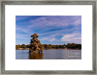 Bald Cypress And Wispy Clouds City Park By University Lake - Baton Rouge Louisiana Framed Print by Silvio Ligutti