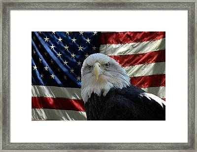 Bald Eagle 321 Framed Print by Joyce StJames