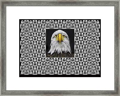 Bald Eagle Framed Print by Adrian Campfield