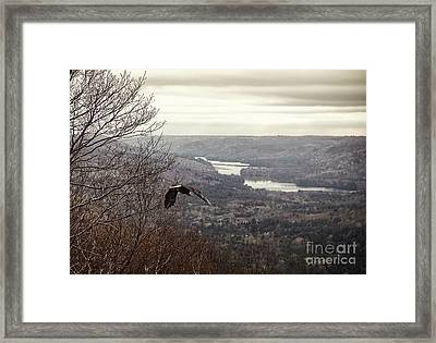 Bald Eagle Framed Print by HD Connelly