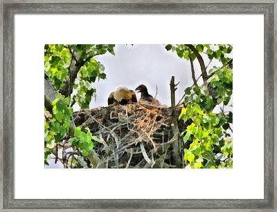 Bald Eagle Painting Framed Print by Dan Sproul