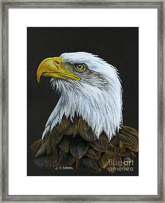 Bald Eagle Framed Print by Sarah Batalka